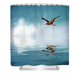 Seagull In Flight Shower Curtain by Cyndy Doty