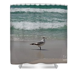 Seagull Shower Curtain by Megan Cohen