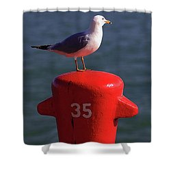Seagull Number 35 Shower Curtain