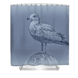 Seagull On Post In Blue Shower Curtain by Randy Steele