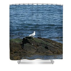 Shower Curtain featuring the digital art Seagull On The Rocks by Barbara S Nickerson