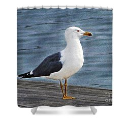 Seagull Portrait Shower Curtain by Sue Melvin