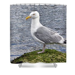 Shower Curtain featuring the photograph Seagull Posing by Glenn Gordon