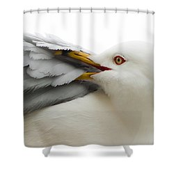 Seagull Pruning His Feathers Shower Curtain by Keith Allen