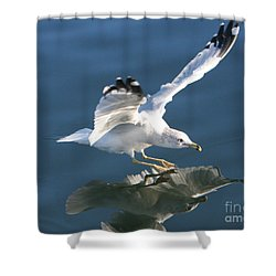 Seagull Reflection Shower Curtain by Rod Jellison