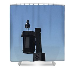 Seagull Sentry Shower Curtain by Russell Keating