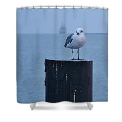 Seagull Ship Shower Curtain
