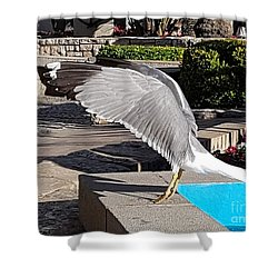 Seagull Showing Off Shower Curtain