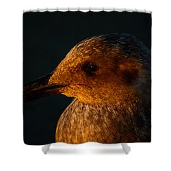 Shower Curtain featuring the photograph Seagull Sunrise by Tikvah's Hope