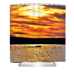 Shower Curtain featuring the photograph Seagull Sunset At Jordan Lake by Kelly Nowak
