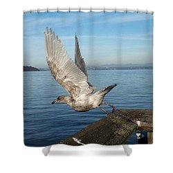 Seagull Taking Off Shower Curtain by Karen Molenaar Terrell