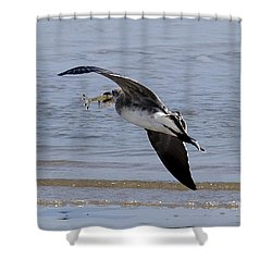 Seagull With Shrimp Shower Curtain
