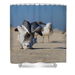 Seagull Yoga Shower Curtain
