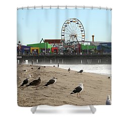 Seagulls And Ferris Wheel Shower Curtain