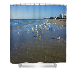 Seagulls And Terns On The Beach In Naples, Fl Shower Curtain by Robb Stan