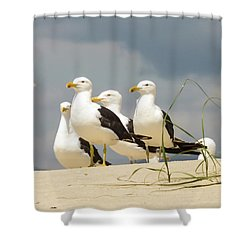 Seagulls At The Beach Shower Curtain