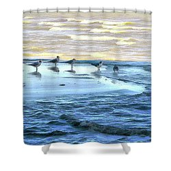 Seagulls At Waters Edge Shower Curtain by Cedric Hampton