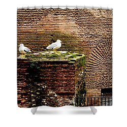 Seagulls By The Pantheon Shower Curtain