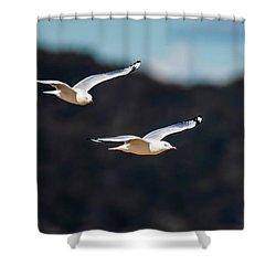 Seagulls In Flight Shower Curtain