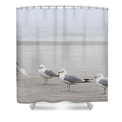 Seagulls On Foggy Beach Shower Curtain by Elena Elisseeva