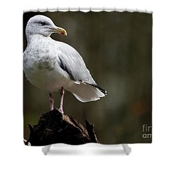 Seagulls Perch Shower Curtain