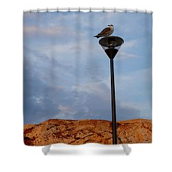 Seagull's Post Shower Curtain