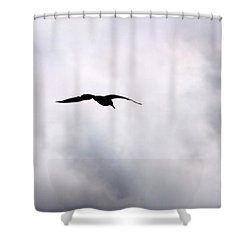 Shower Curtain featuring the photograph Seagull's Sky 2 by Jouko Lehto