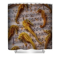 Seahorses On Sheet Music Shower Curtain