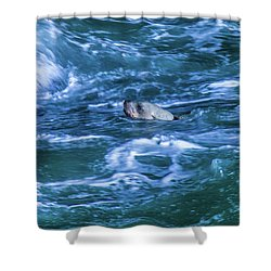 Shower Curtain featuring the photograph Seal In Teh Water by Jonny D
