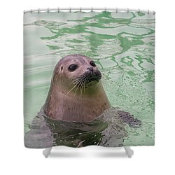 Seal In Water Shower Curtain by Patricia Hofmeester