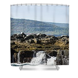 Seal Island Shower Curtain