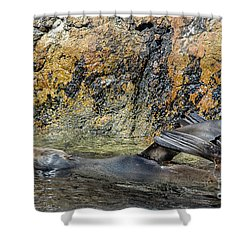 Seal On His Back Shower Curtain
