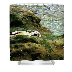 Shower Curtain featuring the photograph Seal On The Rocks by Anthony Jones