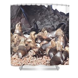 Ballestas Islands' Sealions Shower Curtain