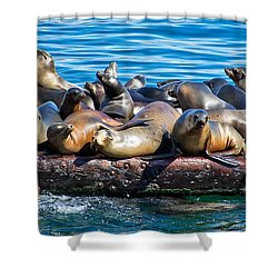 Sealions On A Floating Dock Another View Shower Curtain