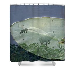Search Shower Curtain by Priscilla Richardson