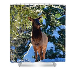 Searching For Food Shower Curtain