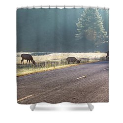 Searching For Greener Grass Shower Curtain
