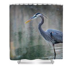 Shower Curtain featuring the photograph Searching For Lunch by Julie Andel