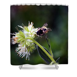 Searching For Pollen Shower Curtain