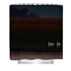 Searching For The Breakfast Bar Shower Curtain