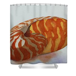 Seashell 1 Shower Curtain