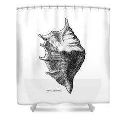 Shower Curtain featuring the drawing Seashell 1 - Nautical Beach Drawing by Karen Whitworth