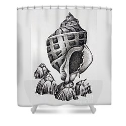 Seashell And Barnacles Shower Curtain by James Williamson