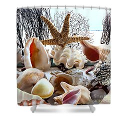 Seashell Galore Shower Curtain