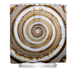 Seashell Spirals Shower Curtain by Bill Brennan - Printscapes