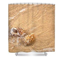 Seashell Turbulence Shower Curtain by Kaye Menner