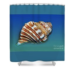 Seashell Wall Art 1 Shower Curtain by Kaye Menner