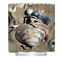 Shower Curtain featuring the photograph Seashells At Holgate Beach by John Rizzuto
