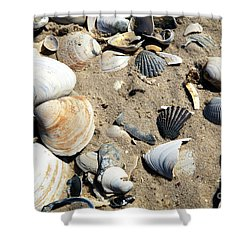 Shower Curtain featuring the photograph Seashells by John Rizzuto